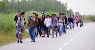 migranti-u-bih-123-810x453